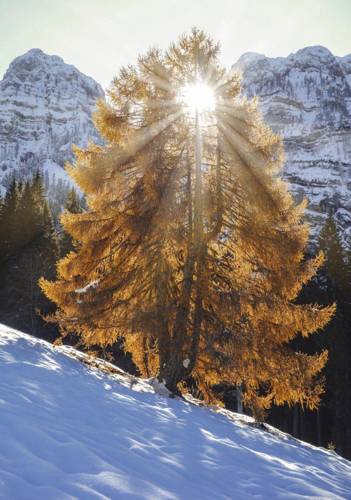 """© Ruggero Alberti - """"L'illuminato"""""""
