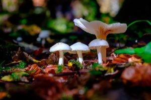 """© Luca Baronchelli - """"Funghi in autunno"""""""